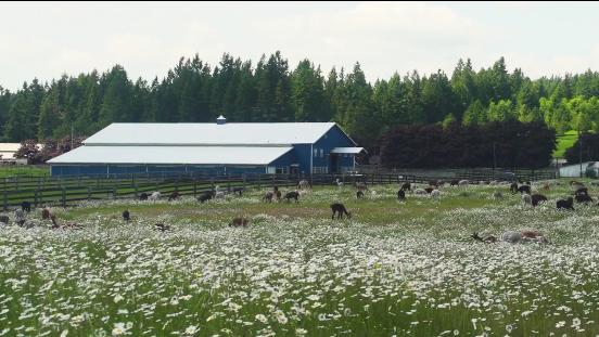 Alpacas of America Ranch