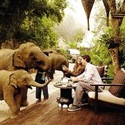 Tea with elephants