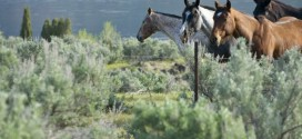 Ravenwing Ranch – The Ultimate Trophy Estate