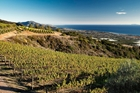 Ocean View Vineyard Parcel